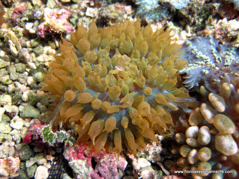 list the fish and invertebrates you Saltwater aquarium fish guide for saltwater fish  , goby, grammas and basslets, saltwater invertebrates  below you will find our compiled list.